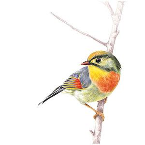 彩铅动物 - 飞乐鸟课程