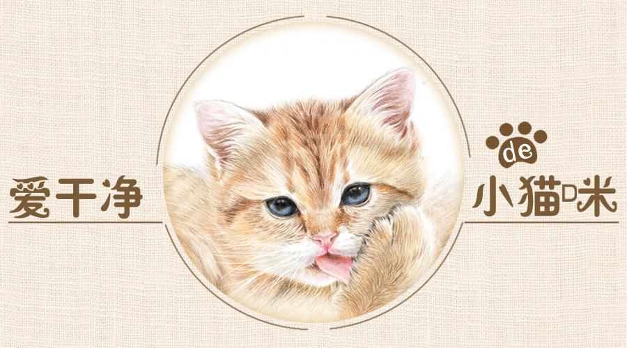 爱干净的小猫咪