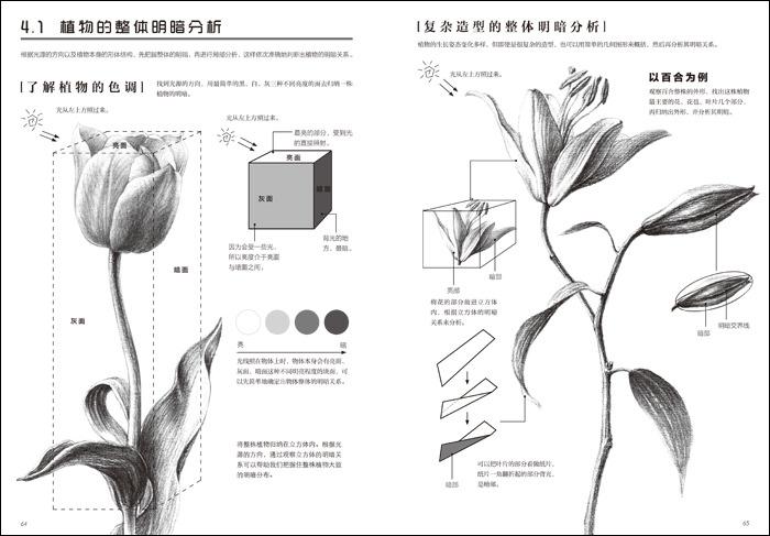 素描基础 画植物
