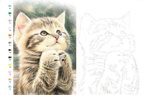 猫咪绘明信片组