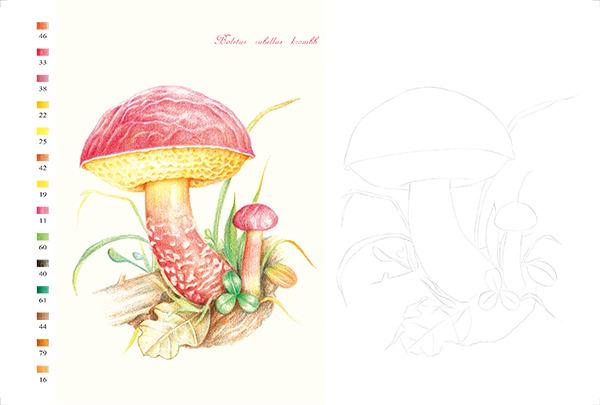 色铅笔的手绘时光 蘑菇绘明信片组